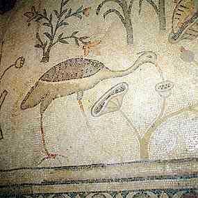 oiseau-buvant